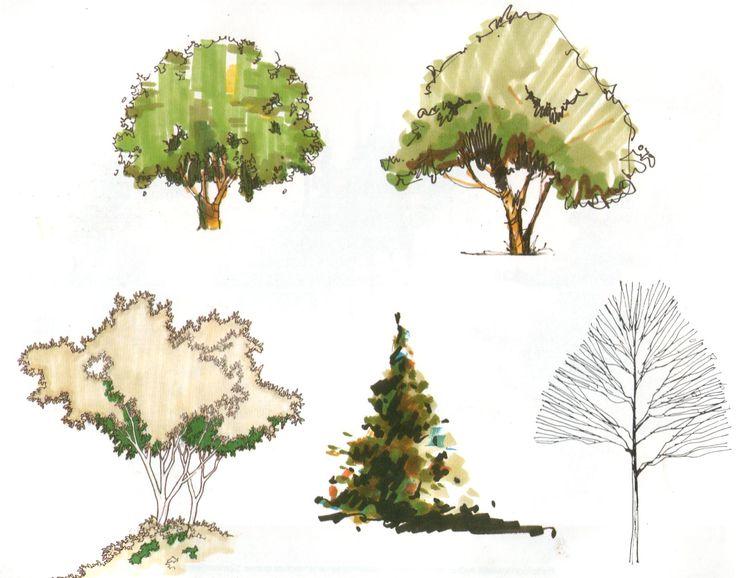 arboles arquitectonicos - Buscar con Google