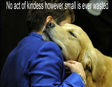 Addie Comfort Dog    (Facebook via K9 Parish Comfort Dogs)