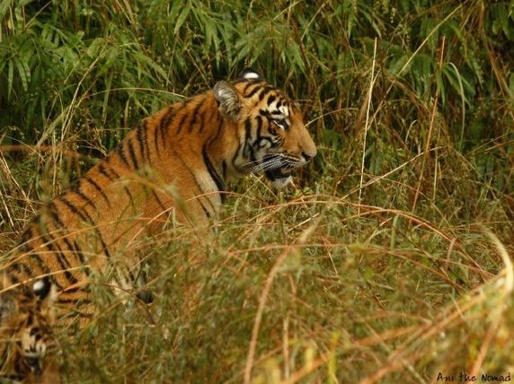 Pugmarks offers cherishable camping experience to youngsters in wildlife, tadoba national park, trekking and adventure. http://www.pugmarks123.com/category/27-tadoba.html