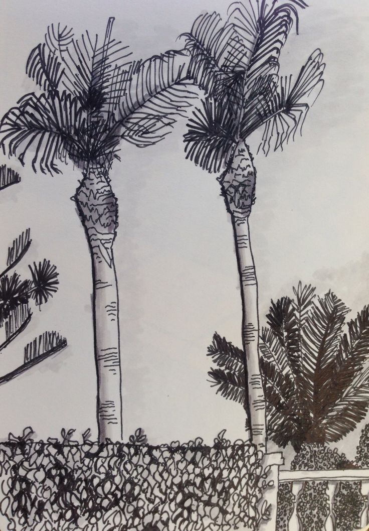 Palmtrees in Spain, fine-liner and promarker.