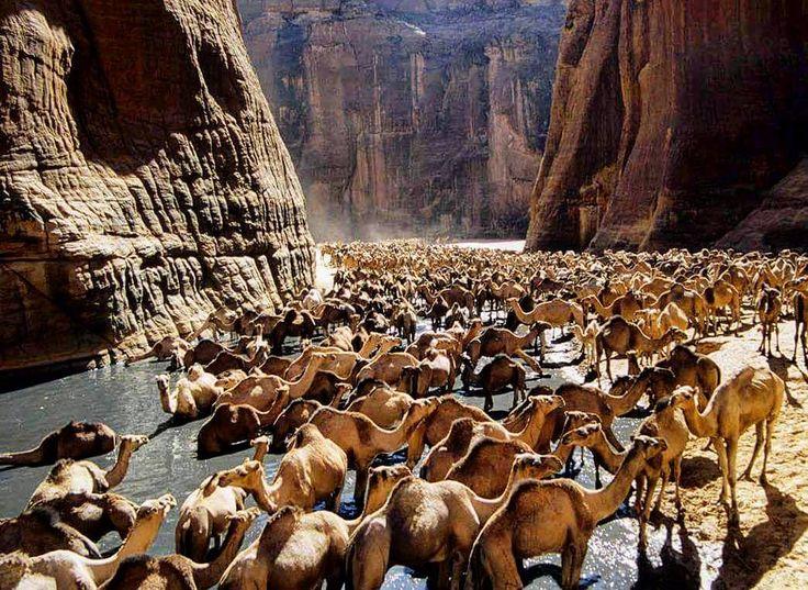 Camel's valley wadi el Gemal Egypt  #travelingram #instagood #travelgram…