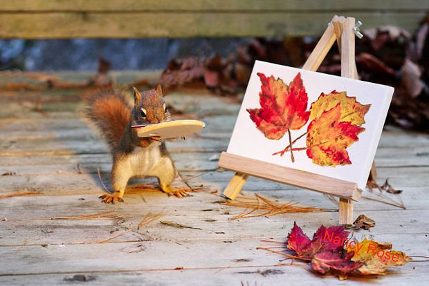 Don't Mind These Squirrels, They're Just Doing Regular Human Stuff - Explore like a Gipsy, Study like a Ninja