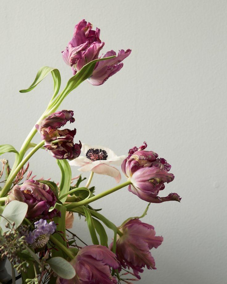 inspiration | purple tulips