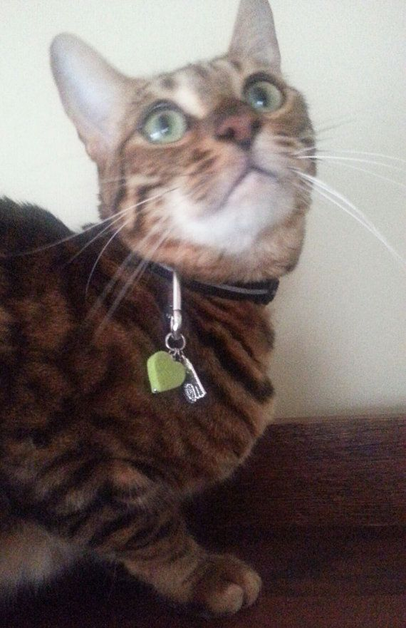 Marmalade's Green Heart Cat Aromatherapy Tag by Aromawearables