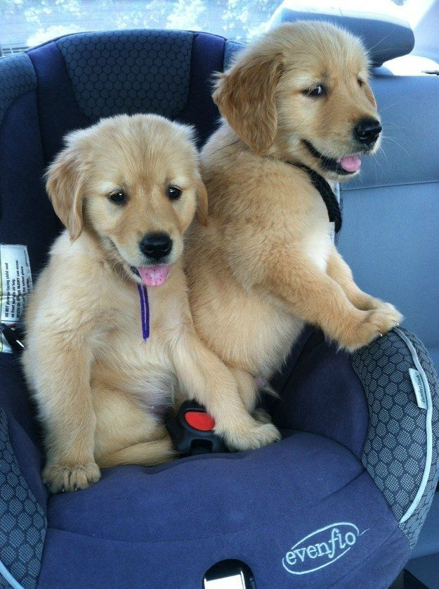 """""""Car rides are way less scary with your best bud by your side.""""   17 Dogs With Their Best Doggy Friends"""