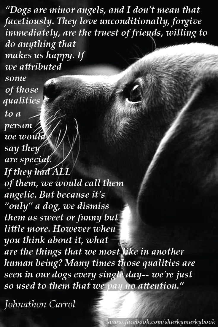 "inspirational quote on dogs from Carroll ""Dogs are angels"" Instagram@sharkymarkybook"