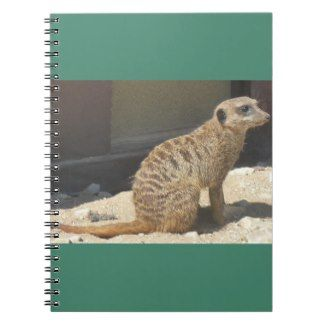 Raintree Earth Design: The Wonderful Meerkat In Gifts