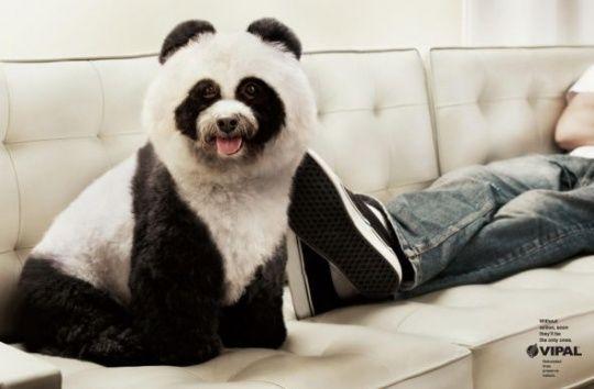 VIPAL Environmental Awareness: Panda