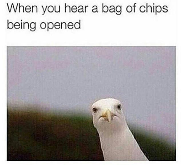 Funny All The Time: 21 Funny Memes That Will Make Your Day.