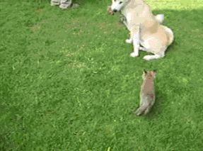Two adopted baby foxes and their step mom