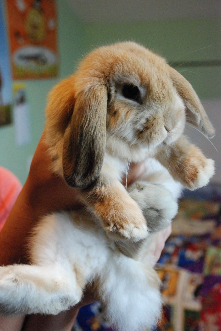 one of the cutest bunnies ever!! but I don't like how their holding him.