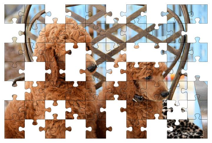 Free Jigsaw Puzzle Online - Poodle Puppies
