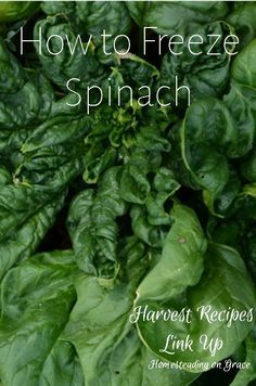 How to Freeze Spinach