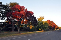 the autumn tree's of Ballan in Regional Victoria. (Australia)