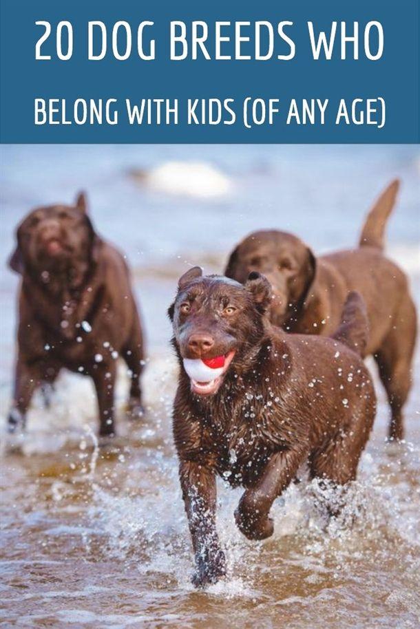 Dog Training Images Don Sullivan Dog Training Reviews Dog