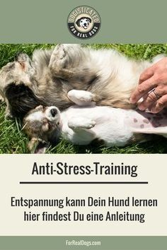 Beruhige Deinen sensiblen Hund mit einem ganz gezi…