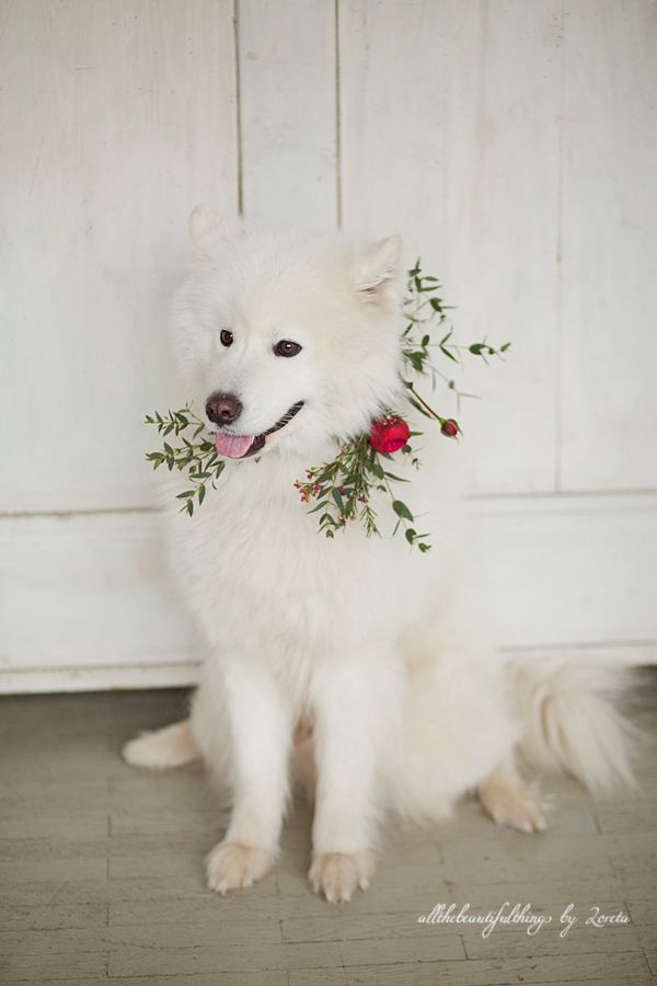 Sweet pet? Be sure to include them in your wedding day. Even look cuter with a flower collar!