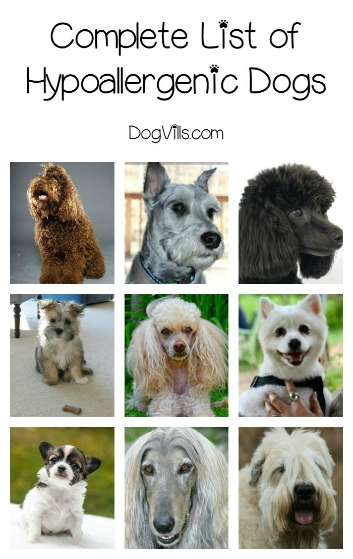 3275 Best Dog Breeds Images On Pinterest Doggies Dog