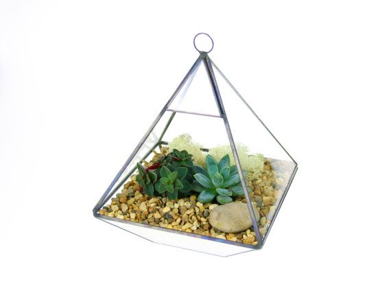 Hey, I found this really awesome Etsy listing at https://www.etsy.com/uk/listing/484331094/pyramid-terrarium-kit-with-living-plants