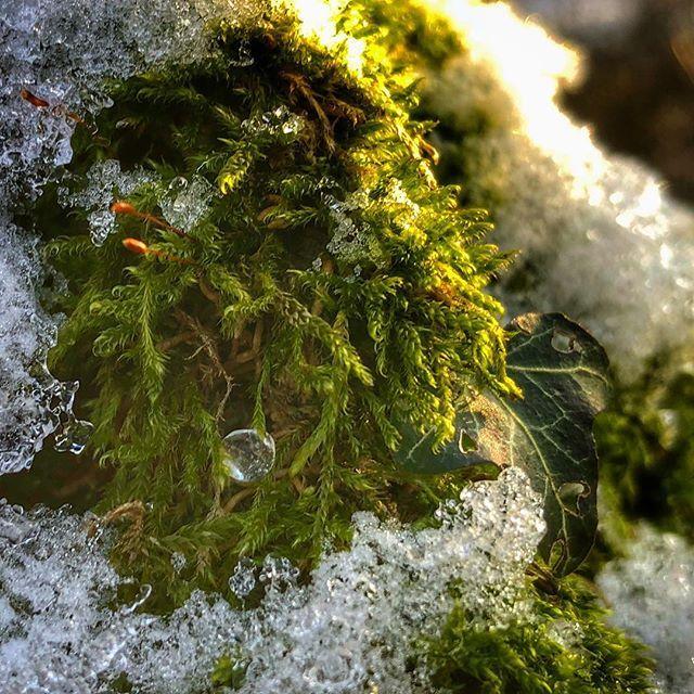 #mobilnytydzien159 #iphonex #iphoneographer #iphoneonly #photooftheday #spacerkiem #artystycznapodroz #lubiepolske #loves_poland #mobile_perfection #naturephotography #nature_perfection #drop