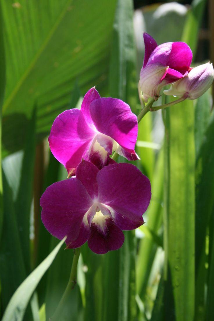 Comment Soigner Une Orchidee Avec Images Comment Entretenir