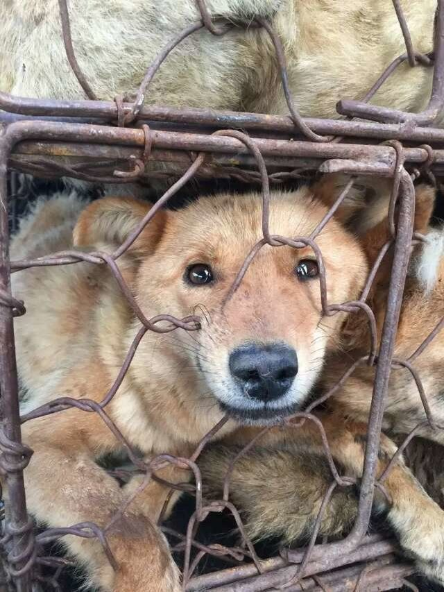 Help us provide direct emergency care for dogs saved from slaughterhouses in Yulin, China.