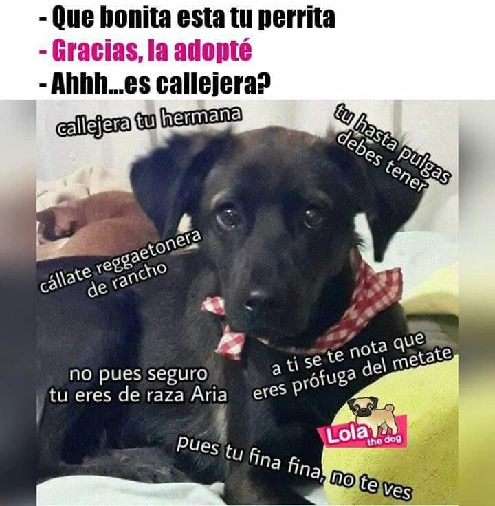 Callejera Tu Jaja Adopta Expertoanimal Mundoanimal Reinoanimal Animales Naturaleza Mascotas Chistes De Perros Memes Perros Memes Espanol Graciosos