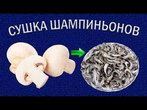 Сушка шампиньонов в электросушилке для овощей   Приготовление грибного порошка - YouTube