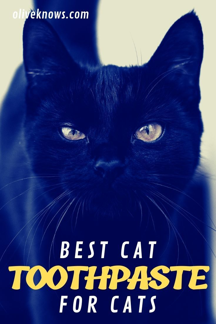 Best Cat Toothpaste Of 2019 Keep Your Cat S Mouth Healthy In 2020 Cat Bad Breath Bad Breath Remedy Bad Breath