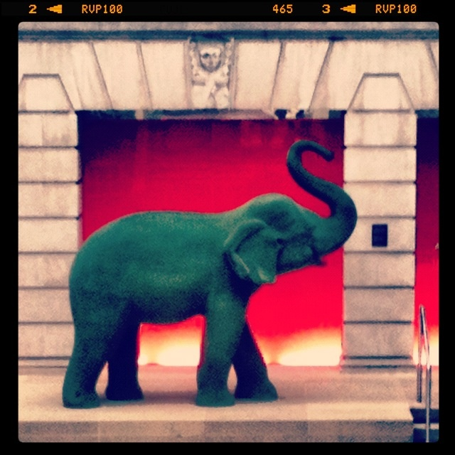 Elephant loose in London