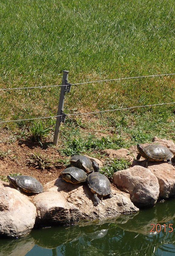 Χελώνες - Αττικό πάρκο