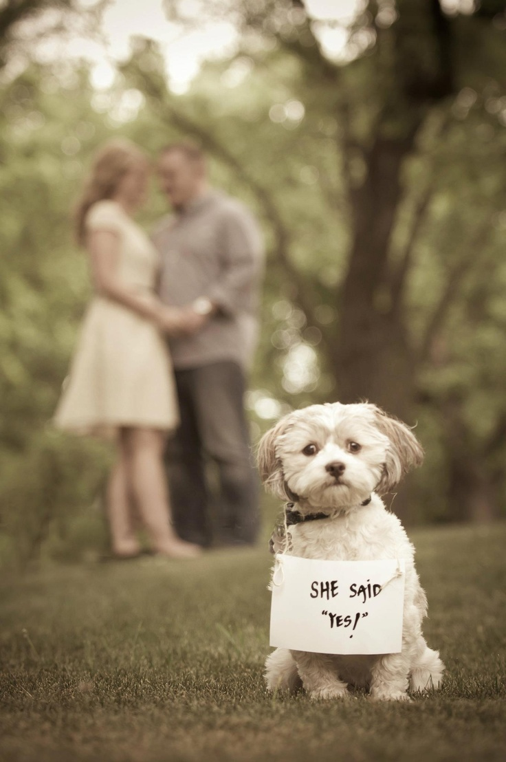 Engagement Pre Wedding Shoots on Best Fall Theme Images On Pinterest Diy Beautiful And
