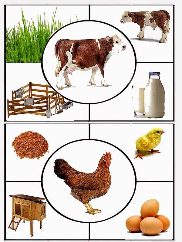 (2015-12) Ko + høne: mad, unge, bolig, produkt