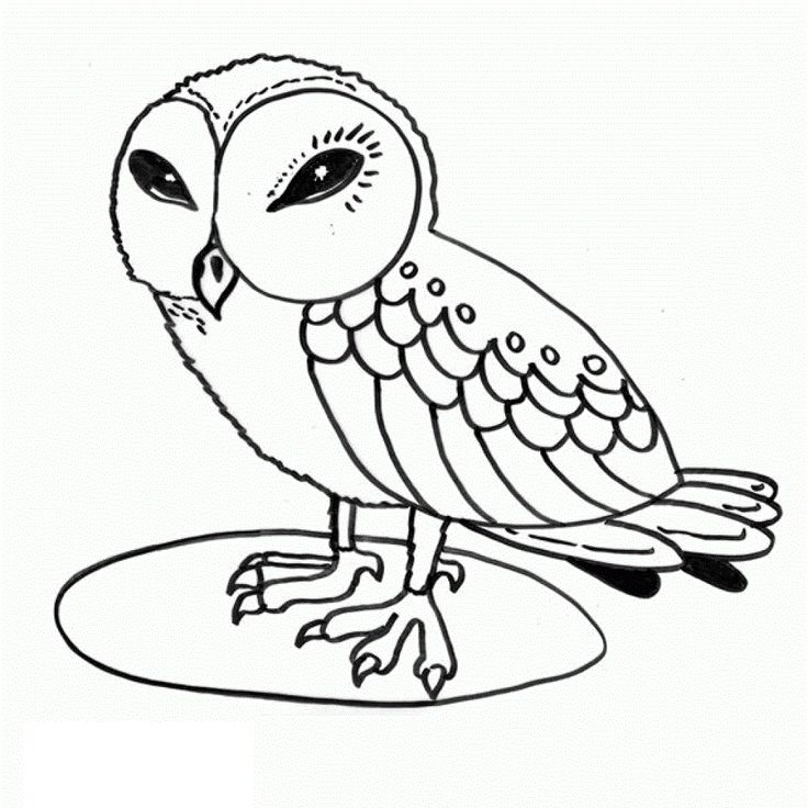 257 best owls & other birds images on pinterest | owl coloring ... - Free Printable Owl Coloring Pages