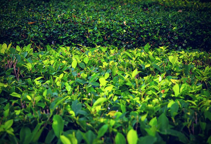 Green Summer Grass Photograph by Nadezhda Tikhaia #NadezhdaTikhaiaFineArtPhotography #ArtForHome #HomeDecor #Grass #Green #InteriorDesign #FineArtPrints