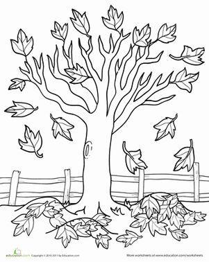 Fall Kindergarten Nature Worksheets: Maple Tree Coloring Page Worksheet by JanieS