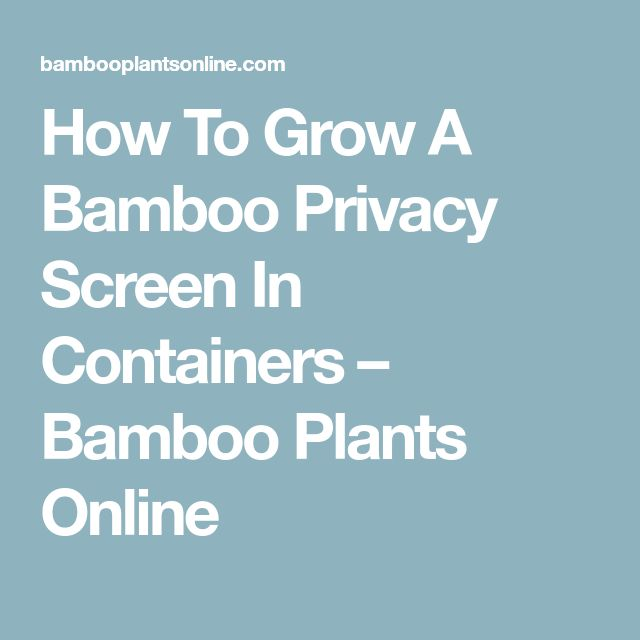 How To Grow A Bamboo Privacy Screen In Containers – Bamboo Plants Online