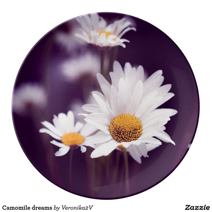 Camomile dreams plate. photo, photography, artwork, buy, sale, gift ideas, camomile, flowers, divination, love, violet, purple, liliac, white, dreams, bright, colorful, glow, petals, dark, home, home decor, comfort
