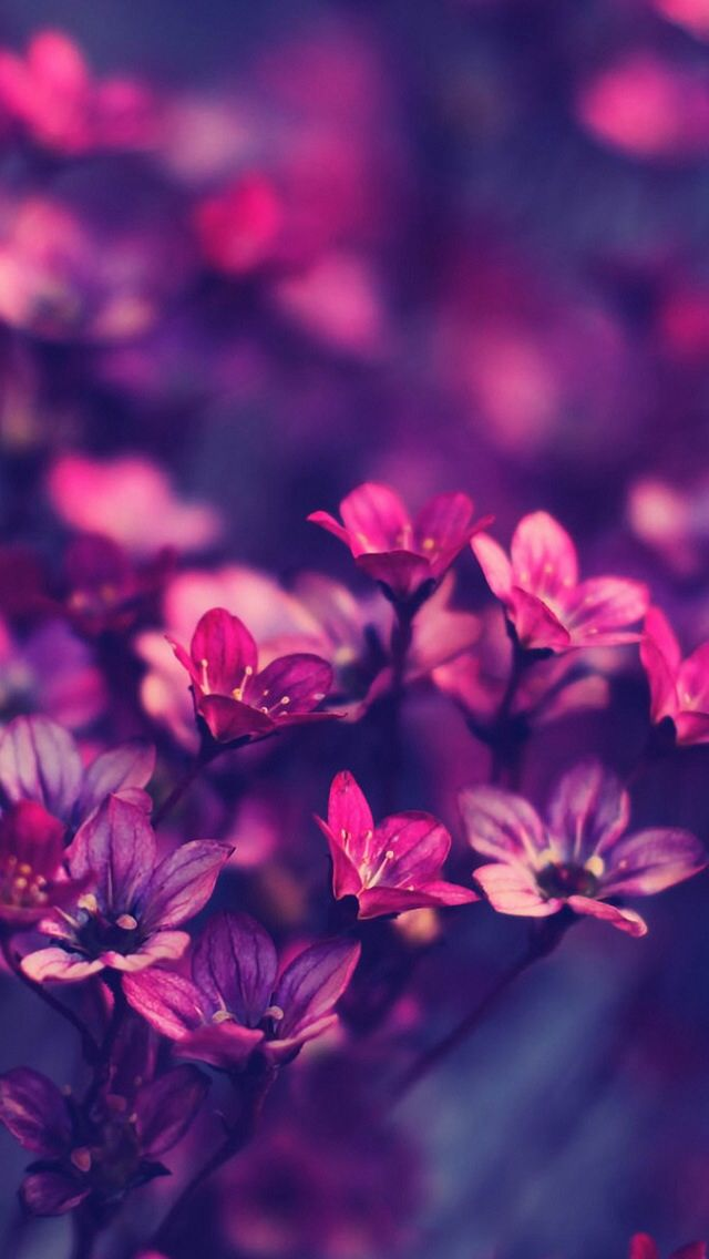 Favori 129 best Pretty HD Wallpapers for iPhone/iPod Touch images on  WU61