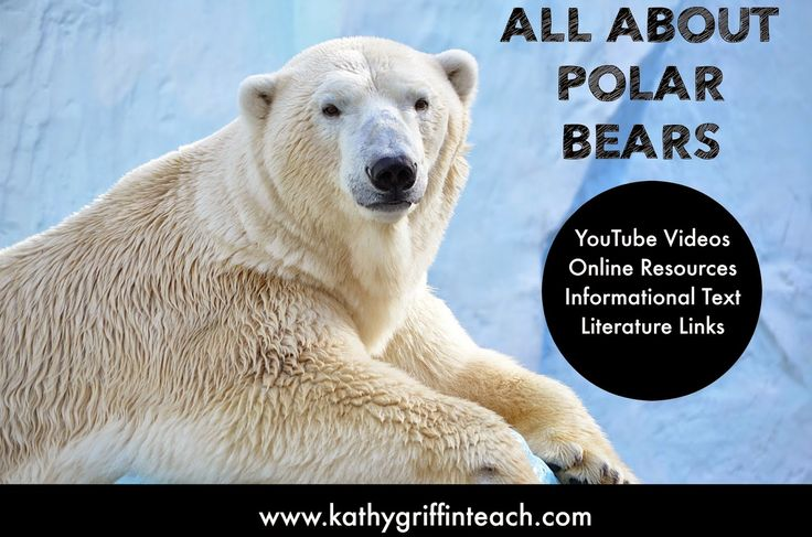 Kathy Griffin's Teaching Strategies: Polar Bear YouTube Videos, Books, and Activities