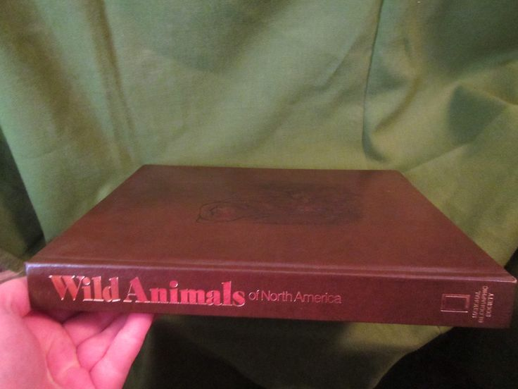 1979 ** Wild Animals of North America ** National Geographic Society **sj by theadlibrary on Etsy