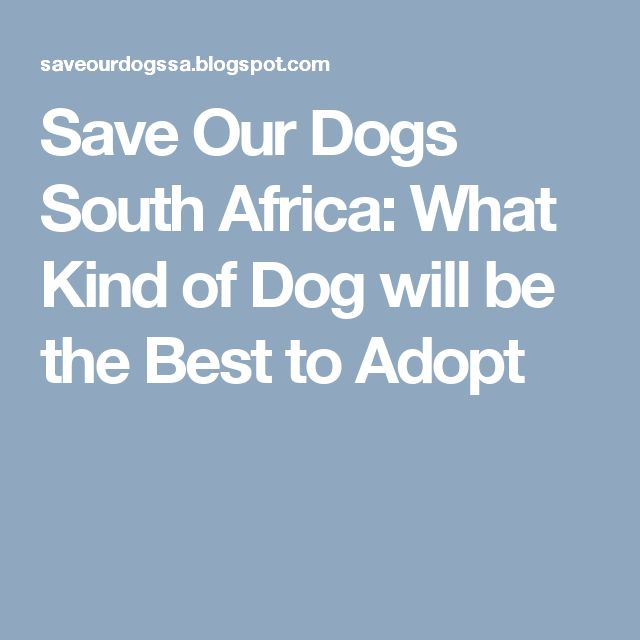 Save Our Dogs South Africa: What Kind of Dog will be the Best to Adopt