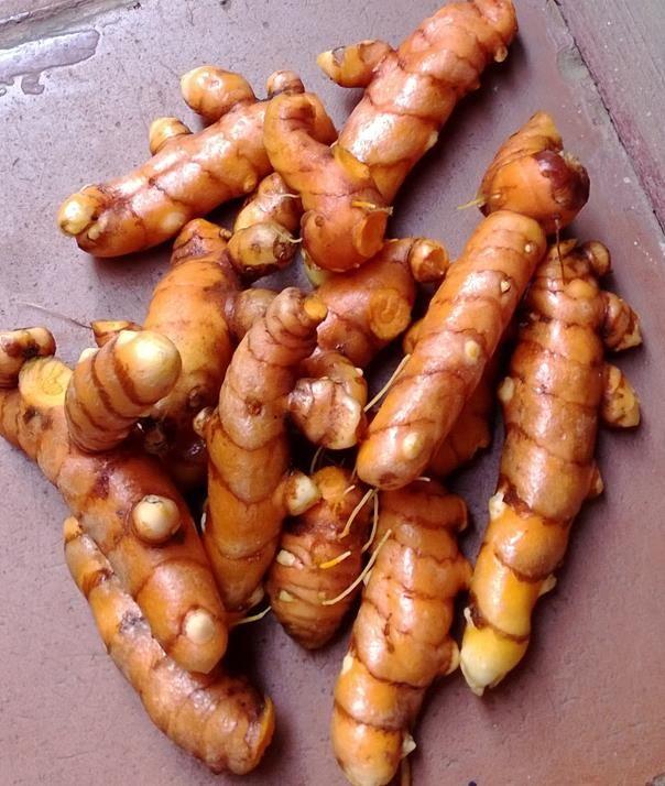 Come coltivare la curcuma, pianta dalle mille virtù