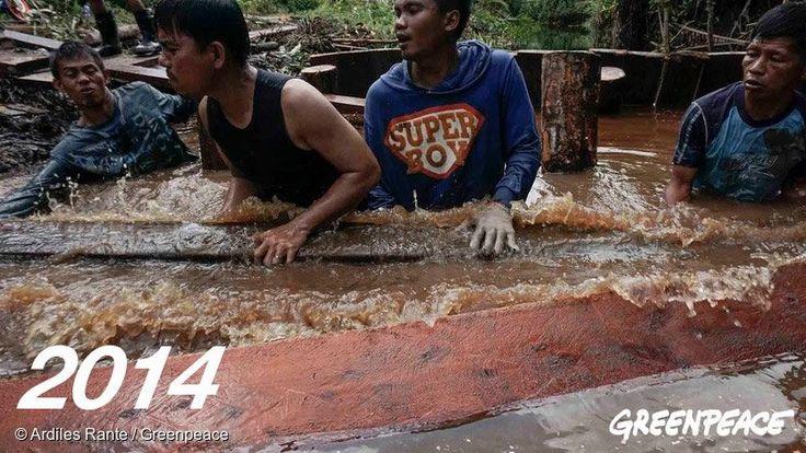 Warga Sungai Tohor, Riau dan aktivis Greenpeace sedang membangun sekat kanal di Sungai Tohor, November 2014.