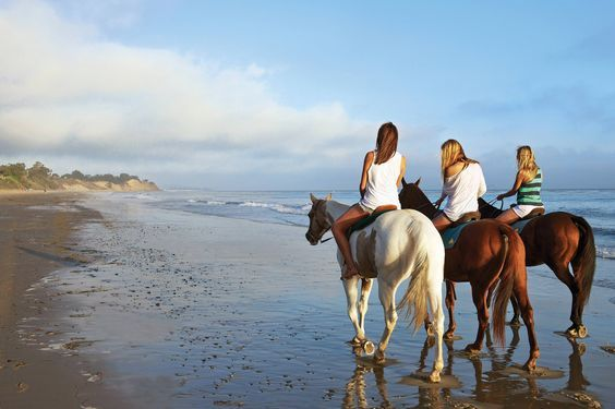 From leisure to luxury, horseback riding in Santa Barbara should be on everyone's to do list. #SeeSB