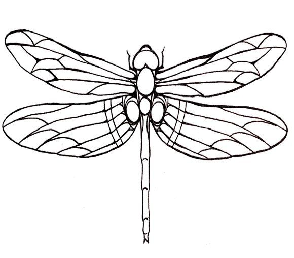 dragonfly line drawings uk
