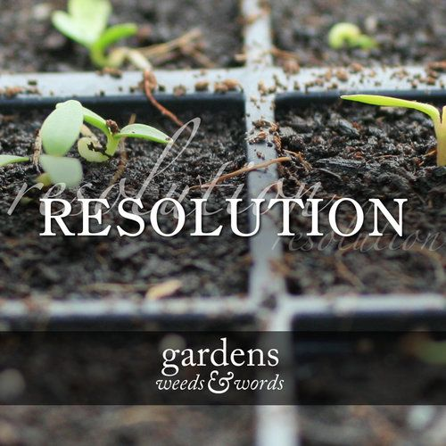 I'm not big on new year's resolutions. To my mind, every day brings with it an opportunity to do better – why wait till January to make them, and then spend the remainder of the year berating yourself for breaking them? With something seasonal, like gardening, however, it makes sense. But I'm still limiting myself to one.