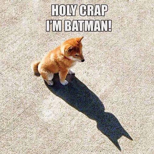 Holy crap! I'm batman