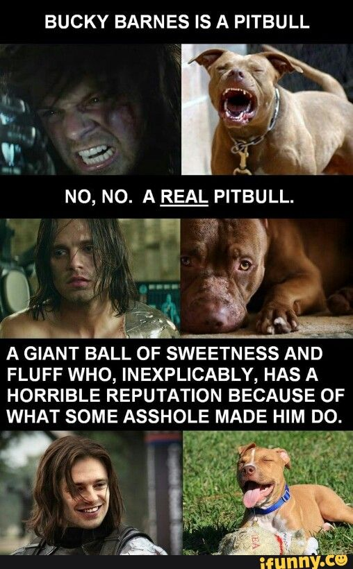 YESSSSS>> This hits me so hard because I love Bucky, but I also love my 4 year old pitbull. We get dirty looks when I walk my dog down the street but just knowing this makes me smile