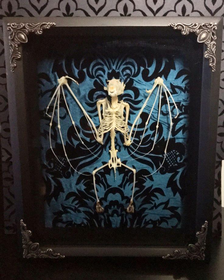 Victorian Bat Skeleton Shadow Box, Spread Bat, Taxidermy, Real Bat Skeleton, Victorian, Memento Mori, Gothic Decor, Preserved Specimen, by beyondthedarkveil on Etsy https://www.etsy.com/ca/listing/480687068/victorian-bat-skeleton-shadow-box-spread